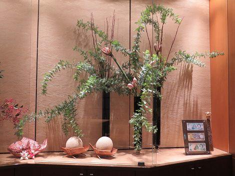 右にアカシア、サンゴ水木、 アマリリス(カリスマ)です。