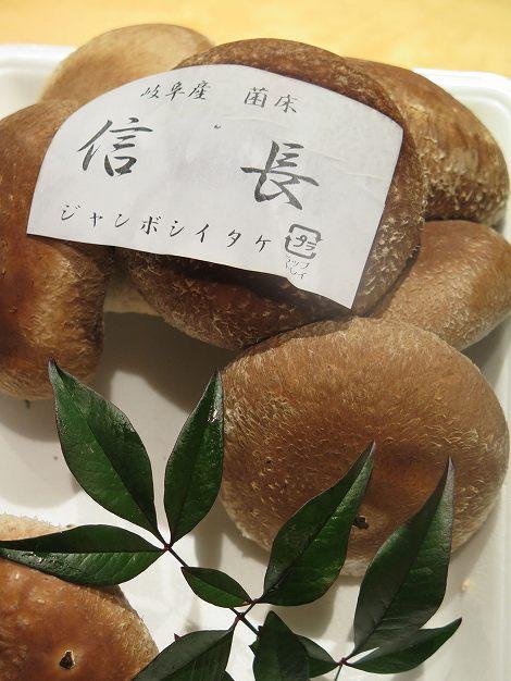 ジャンボシイタケ「信長」は長野県産