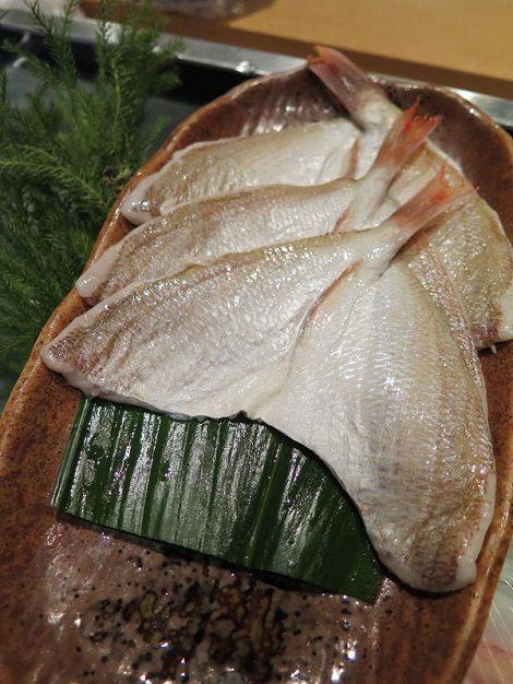 春子鯛(かすこだい)