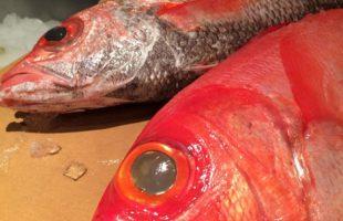 金目鯛とノドグロ