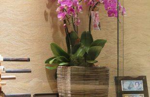今週カウンター席を飾るお花はこちら。 左からコチョウラン