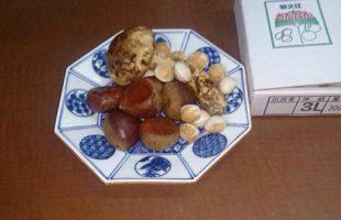 熊本県から来ました、栗! 愛知県は祖父江産、銀杏! 松茸などなど‼︎\(^o^)/