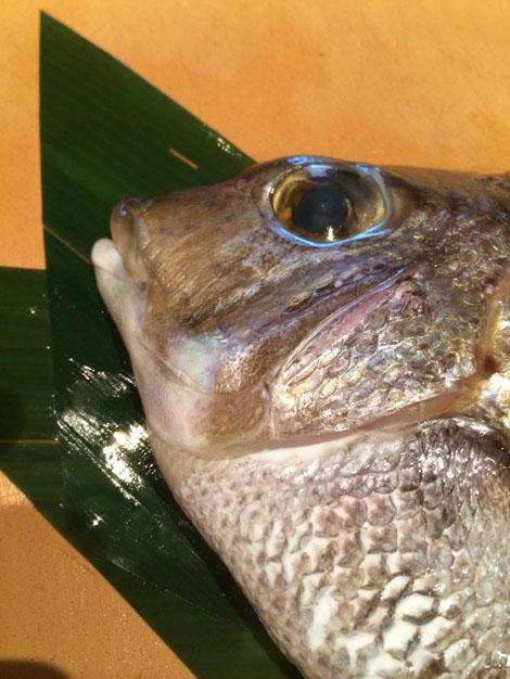 寿司ネタで三重県産です目一鯛です!愛知県ではイチミ鯛っていいますよ。