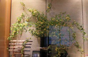 左から、木香バラ