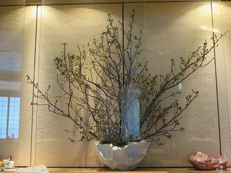 中央が桜(牡丹)