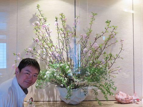 カウンター席の八重桜(関山)は 木曜日でこのくらい咲いています。
