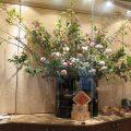 牡丹桜、椿(西王母)、マム(オペラピンク、SPマム)