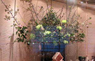 牡丹桜、吉野桜、椿(西王母)、マム(シャムロック)