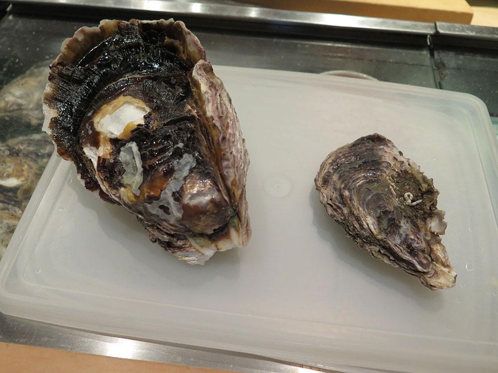 岩牡蠣(左)、マガキ(右)