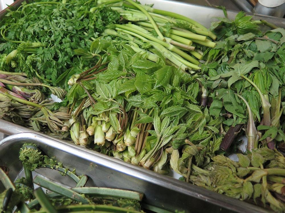 左上から時計回りにノニンジン、モミジガサ、タラの芽、コシアブラ、ウド
