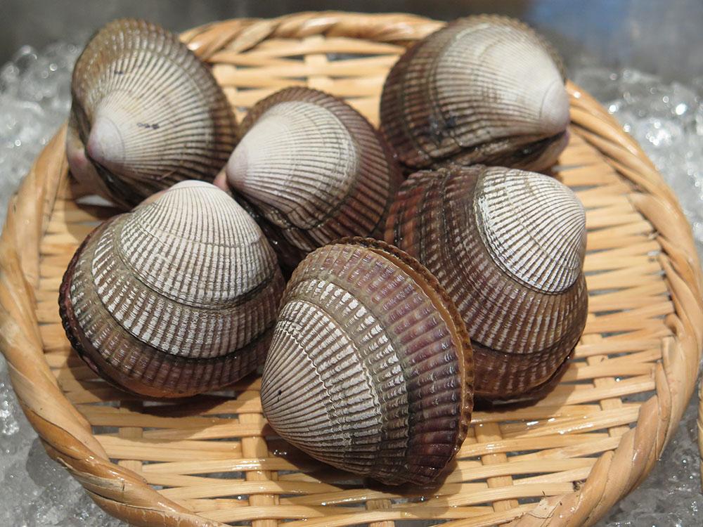 エゾイシカゲ貝