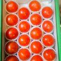 トマト「きわめ」